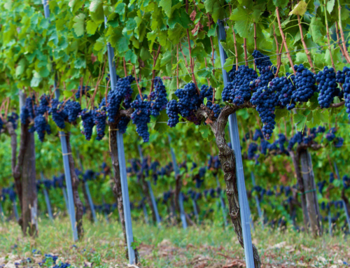 Help us identify the needs of EU vineyard farmers for the development of innovative solutions!